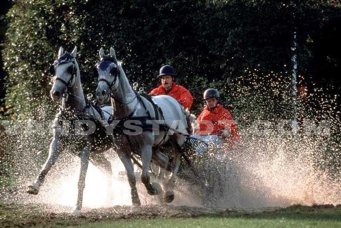 Sportquick equitation historique